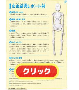 ガイコツ模型で人体謎解き自由研究 : 夏休み「コカねっと ...
