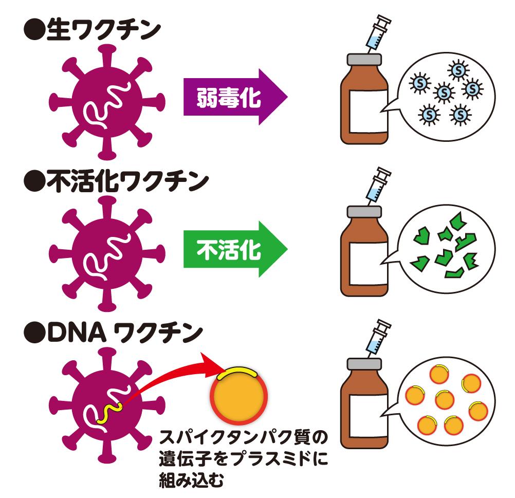 化 コロナ ウイルス 弱毒