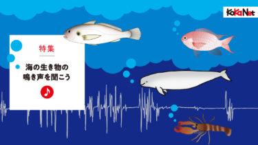 海の生き物の鳴き声を聞こう