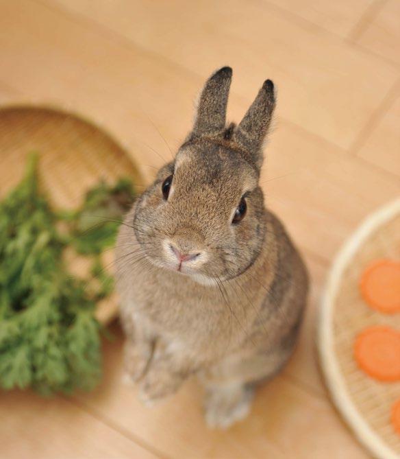 ペットとしても大人気!ウサギの食事を学ぼう【後編】