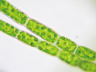 もうすでにキミの家のどこかにいるぞ!「微生物と友達になろう」-自由研究スペシャル